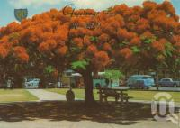 "<span class=""caption-caption"">Poinciana tree, Tugun</span>, 1974. <br />Postcard by <span class=""caption-publisher"">Murray Views Pty Ltd</span>, collection of <span class=""caption-contributor"">Centre for the Government of Queensland</span>."