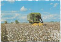 "<span class=""caption-caption"">Cotton pickers, St George</span>, c1970-2000. <br />Postcard, collection of <span class=""caption-contributor"">Murray Views Collection</span>."