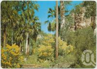 "<span class=""caption-caption"">Carnarvon Gorge near Springsure</span>, c1970-2000. <br />Postcard, collection of <span class=""caption-contributor"">Murray Views Collection</span>."