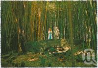 "<span class=""caption-caption"">The Bamboo Grove, Rainforest Tourist Park, High Tor, Maleny</span>, c1970-2000. <br />Postcard, collection of <span class=""caption-contributor"">Murray Views Collection</span>."