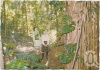 "<span class=""caption-caption"">At the base of the 19-metre Monstera, Rainforest Tourist Park, High Tor, Maleny</span>, c1970-2000. <br />Postcard, collection of <span class=""caption-contributor"">Murray Views Collection</span>."