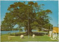"<span class=""caption-caption"">Looking down Noosa River, showing War Memorial and fig tree, Tewantin</span>, c1970-2000. <br />Postcard, collection of <span class=""caption-contributor"">Murray Views Collection</span>."