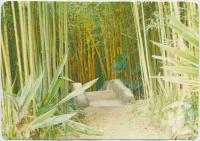 "<span class=""caption-caption"">The Bamboo Grove, Rainforest Tourist Park, High Tor Maleny</span>, c1970-2000. <br />Postcard, collection of <span class=""caption-contributor"">Murray Views Collection</span>."