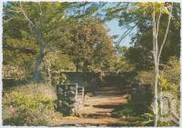 "<span class=""caption-caption"">Formal gardens, Rainforest Tourist Park, High Tor, Maleny</span>, c1970-2000. <br />Postcard, collection of <span class=""caption-contributor"">Murray Views Collection</span>."