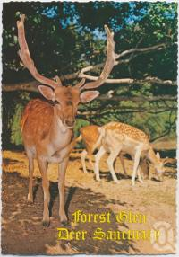 "<span class=""caption-caption"">Caesar, A Fallow Stag, Forest Glen Deer Sanctuary, Bruce Highway</span>, c1970-2000. <br />Postcard, collection of <span class=""caption-contributor"">Murray Views Collection</span>."