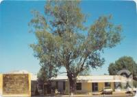 "<span class=""caption-caption"">Leichhardt Tree, Yaldwyn Street, Taroom</span>, c1970-2000. <br />Postcard, collection of <span class=""caption-contributor"">Murray Views Collection</span>."