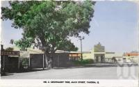 "<span class=""caption-caption"">Leichhardt Tree, main street Taroom</span>, c1938. <br />Postcard, collection of <span class=""caption-contributor"">Fryer Library, UQ</span>."